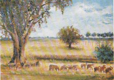 pecore-al-pascolo-sotto-leucalipto-4